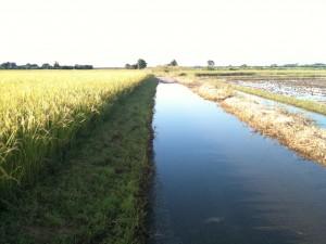 荒川河川敷、道が冠水