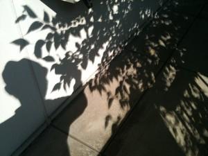 日食の木漏れ日 2012/5/22