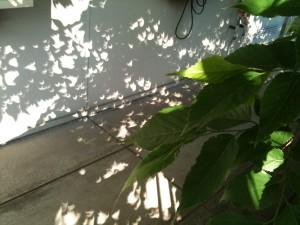 日蝕の木漏れ日 2012/5/21