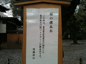 桜の標準木 2013-04-01 027