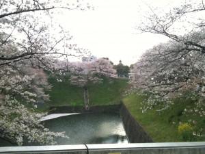 昭和館より田安門を望む 2013-04-01 104