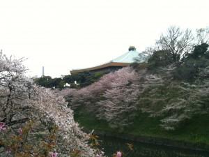 昭和館より武道館を望む 2013-04-01 107