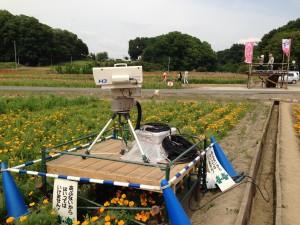 こうのす花まつり、NHKさいたま局の定点カメラ